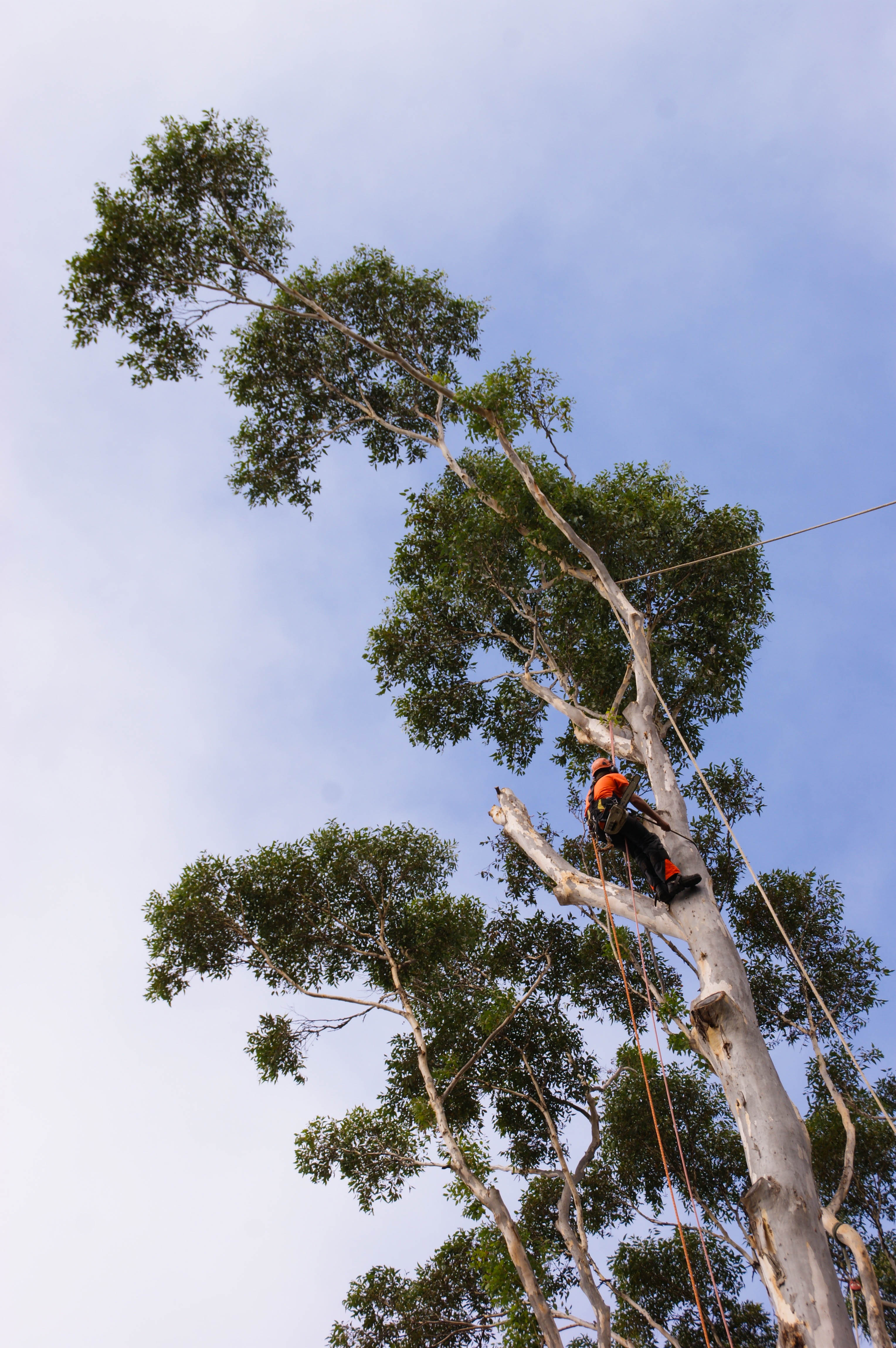 Tree Climbing, Tree Cutting, Tree Services, Tree Professionals, South-West, WA, Busselton, Dunsborough, Margaret River, Augusta